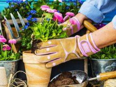 Peraga Garden Shop - Codice sconto Piante e Fiori